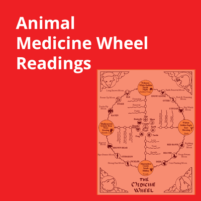 Animal Medicine Wheel Reading